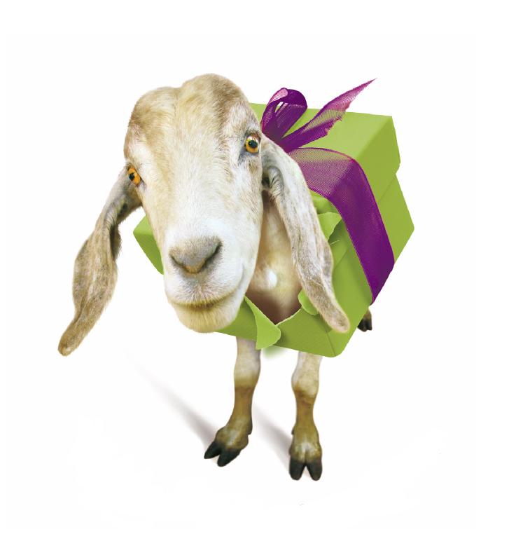 Weihnachtsgeschenk: Ziege von Oxfam unverpackt